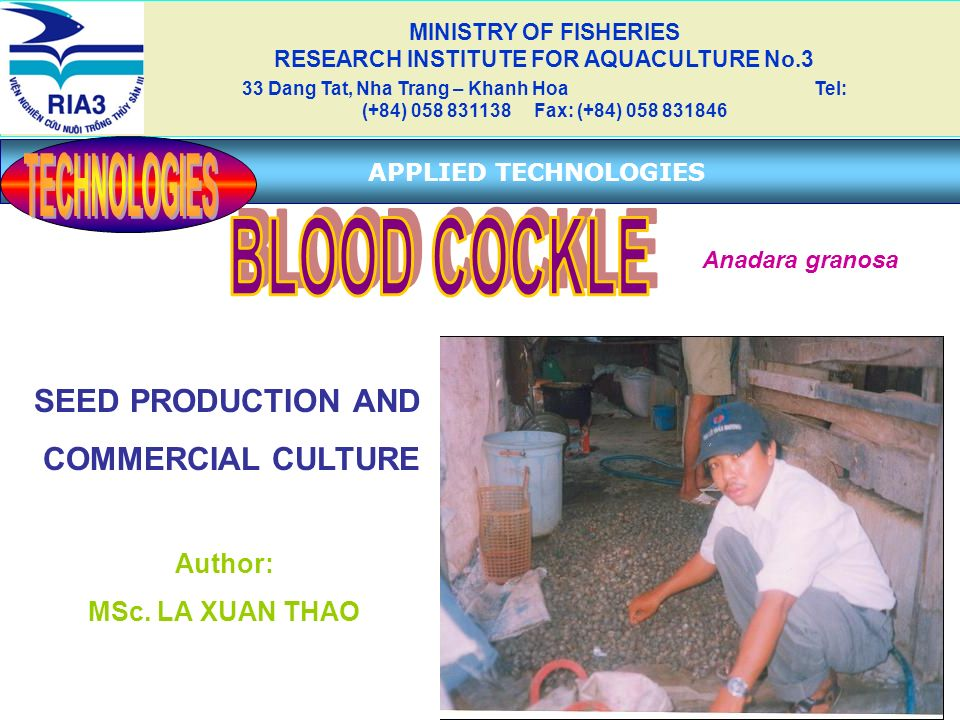 SEED PRODUCTION AND COMMERCIAL CULTURE Author: MSc. LA XUAN THAO MINISTRY OF FISHERIES RESEARCH INSTITUTE FOR AQUACULTURE No.3 33 Dang Tat, Nha Trang