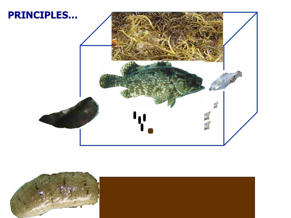 Green mussel Babylonia snail Seaweed Sea cucumber Particulate Organic matter Dissolved Nutrients (N, P) Benthic Organic matter Oxygen
