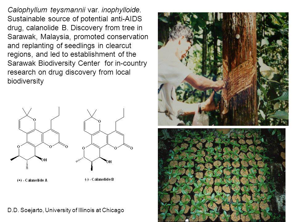 D.D. Soejarto, University of Illinois at Chicago Calophyllum teysmannii var. inophylloide. Sustainable source of potential anti-AIDS drug, calanolide