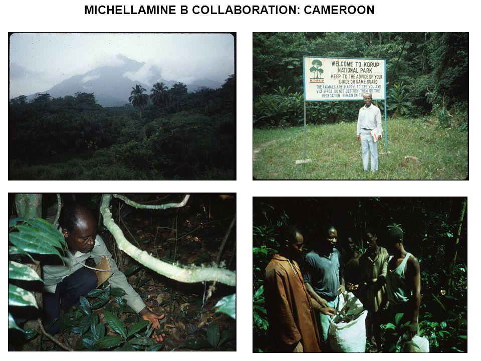 MICHELLAMINE B COLLABORATION: CAMEROON