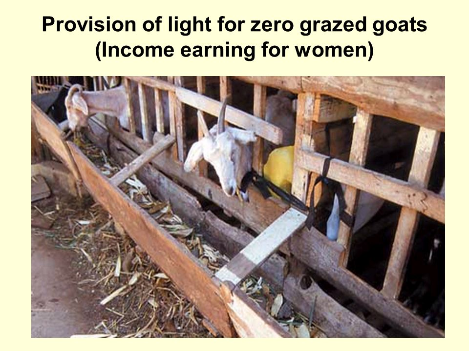 Provision of light for zero grazed goats (Income earning for women)