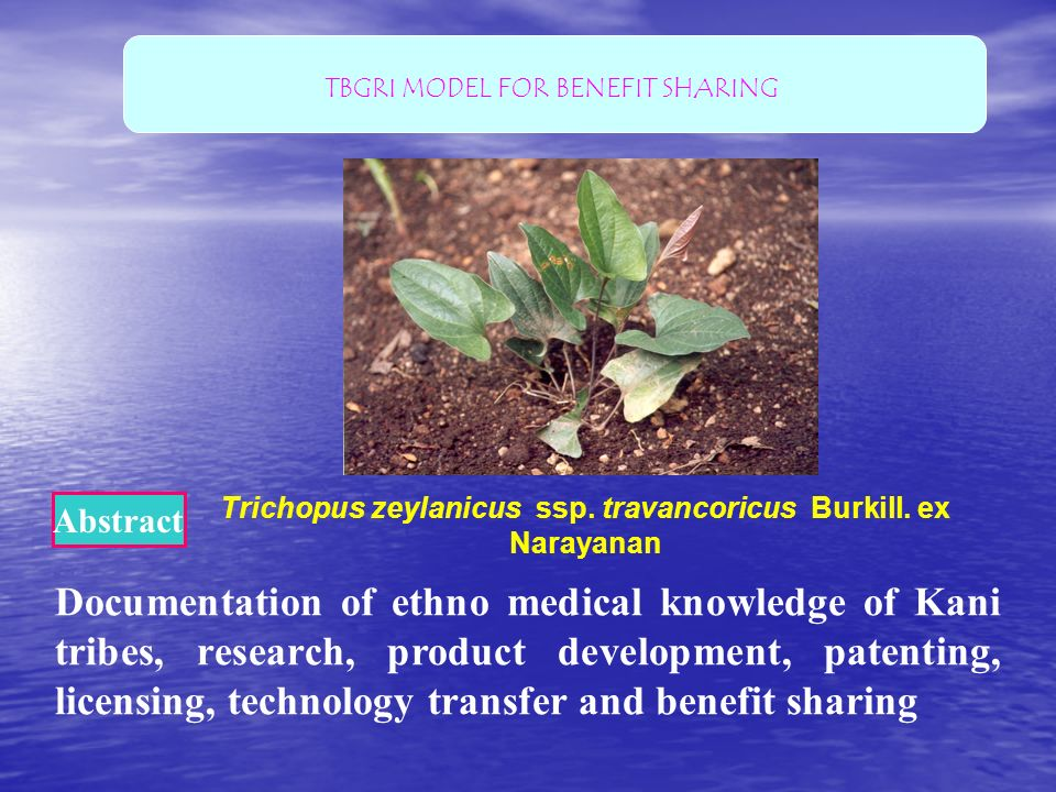 Trichopus zeylanicus ssp. travancoricus Burkill. ex Narayanan Documentation of ethno medical knowledge of Kani tribes, research, product development,