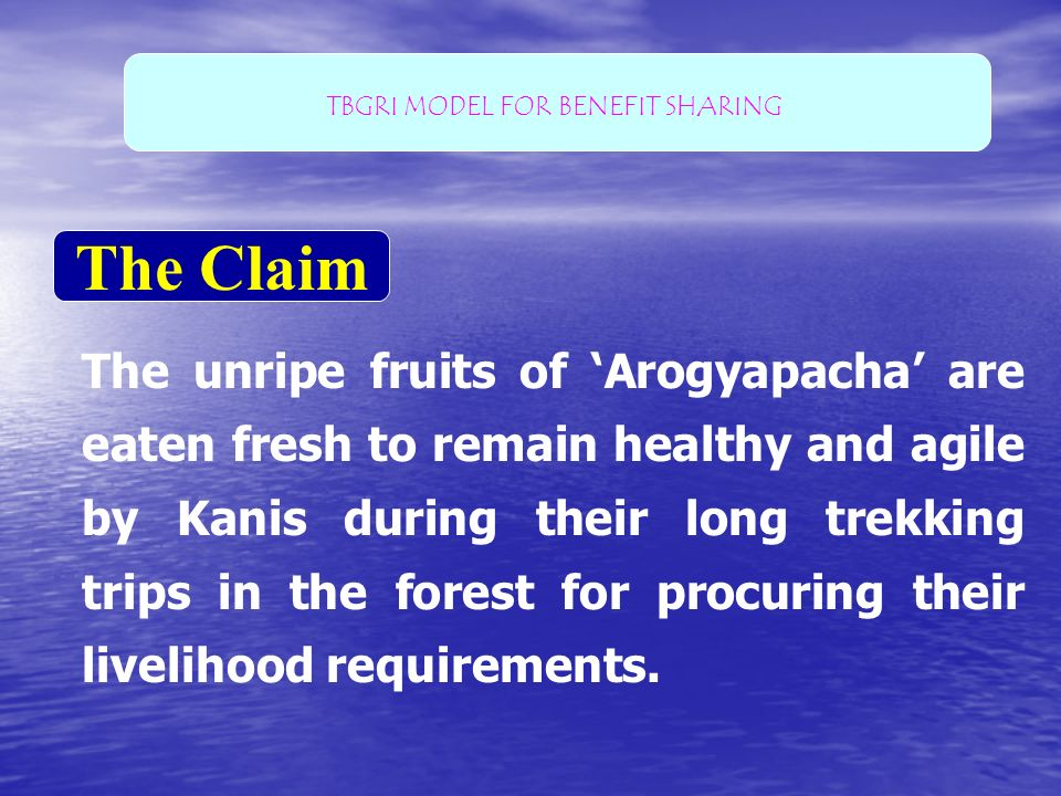 The Claim The unripe fruits of Arogyapacha are eaten fresh to remain healthy and agile by Kanis during their long trekking trips in the forest for pro