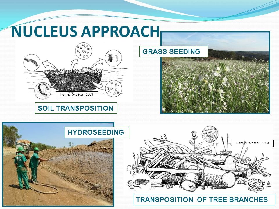 NUCLEUS APPROACH TRANSPOSITION OF TREE BRANCHES HYDROSEEDING GRASS SEEDING SOIL TRANSPOSITION Fonte: Reis et al., 2003