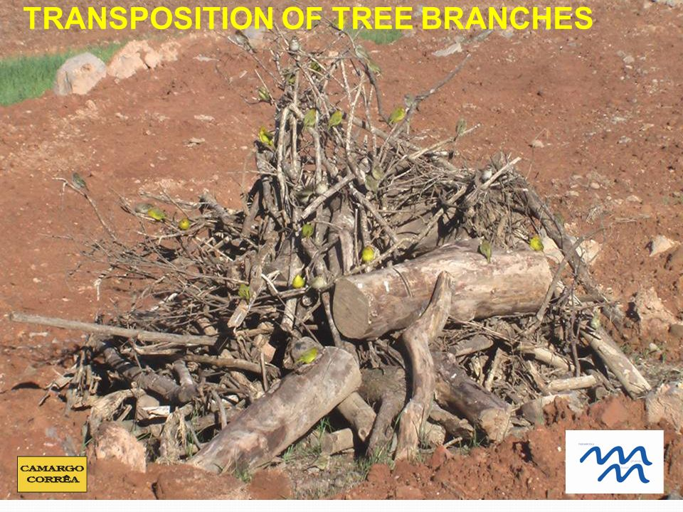 TRANSPOSITION OF TREE BRANCHES