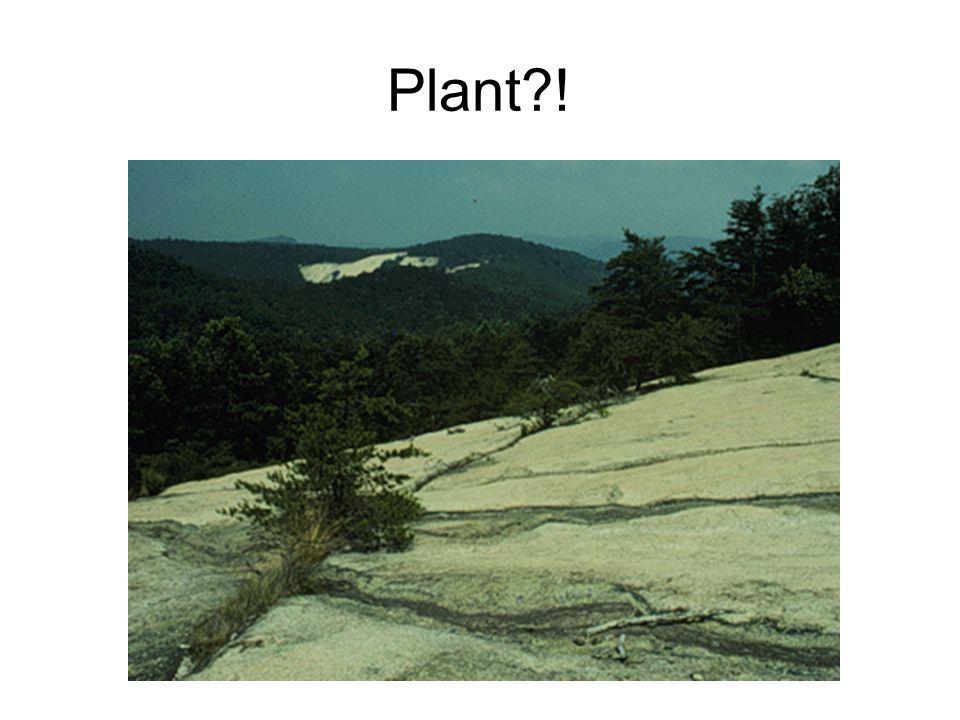 Plant?!