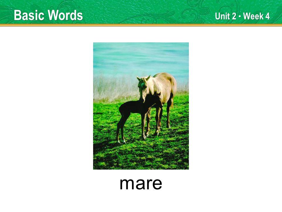 Unit 2 Week 4 mare Basic Words