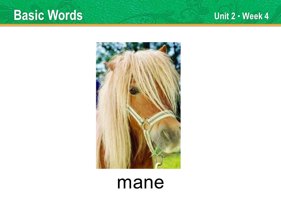 Unit 2 Week 4 mane Basic Words