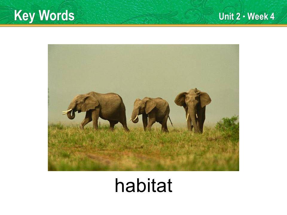 Unit 2 Week 4 habitat Key Words
