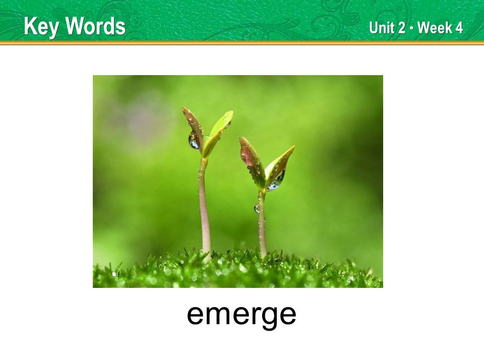 Unit 2 Week 4 emerge Key Words