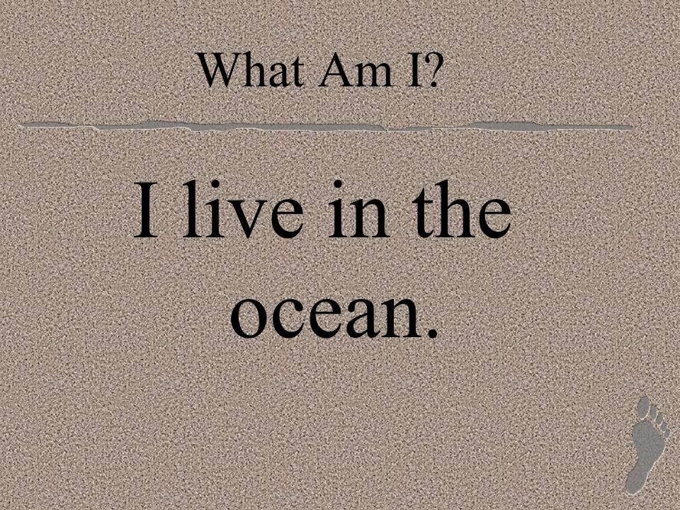 I live in the ocean.