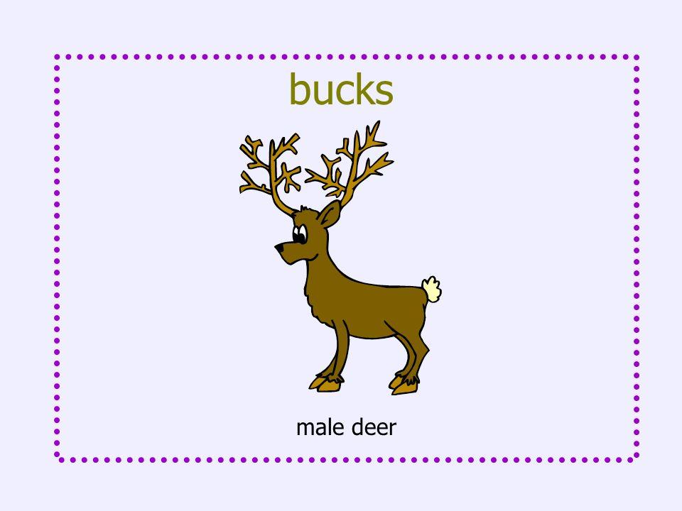 bucks male deer