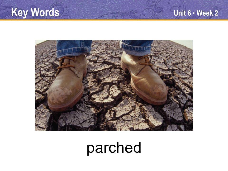 Unit 6 Week 2 parched Key Words