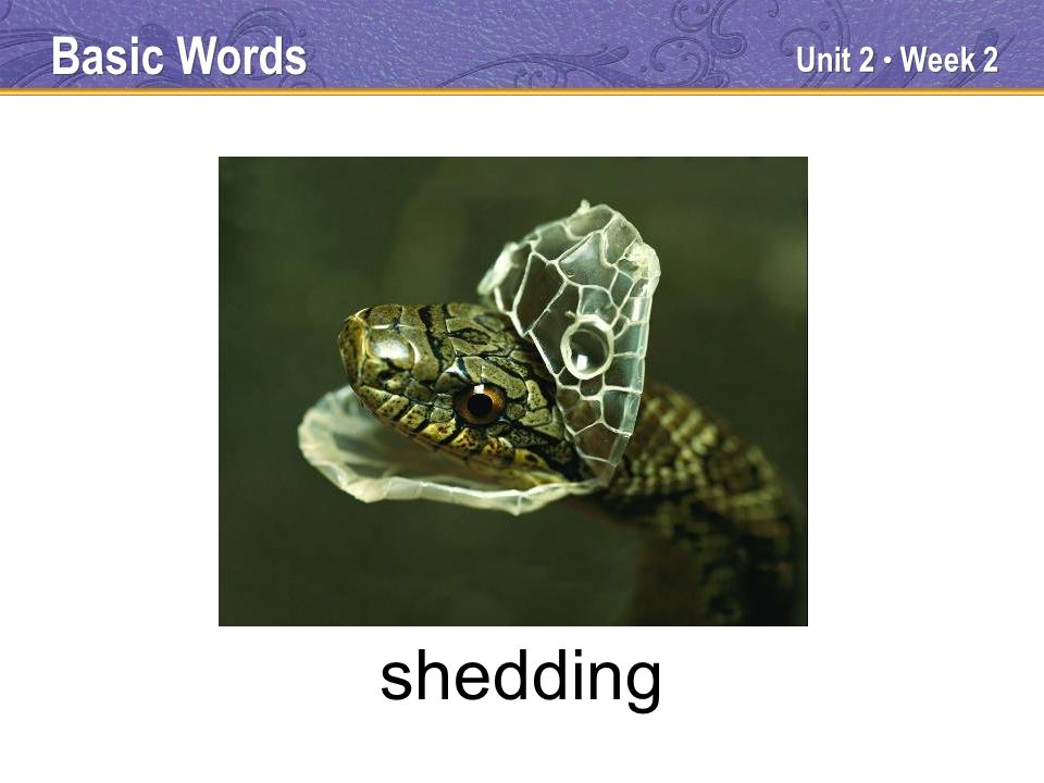 Unit 2 Week 2 shedding Basic Words