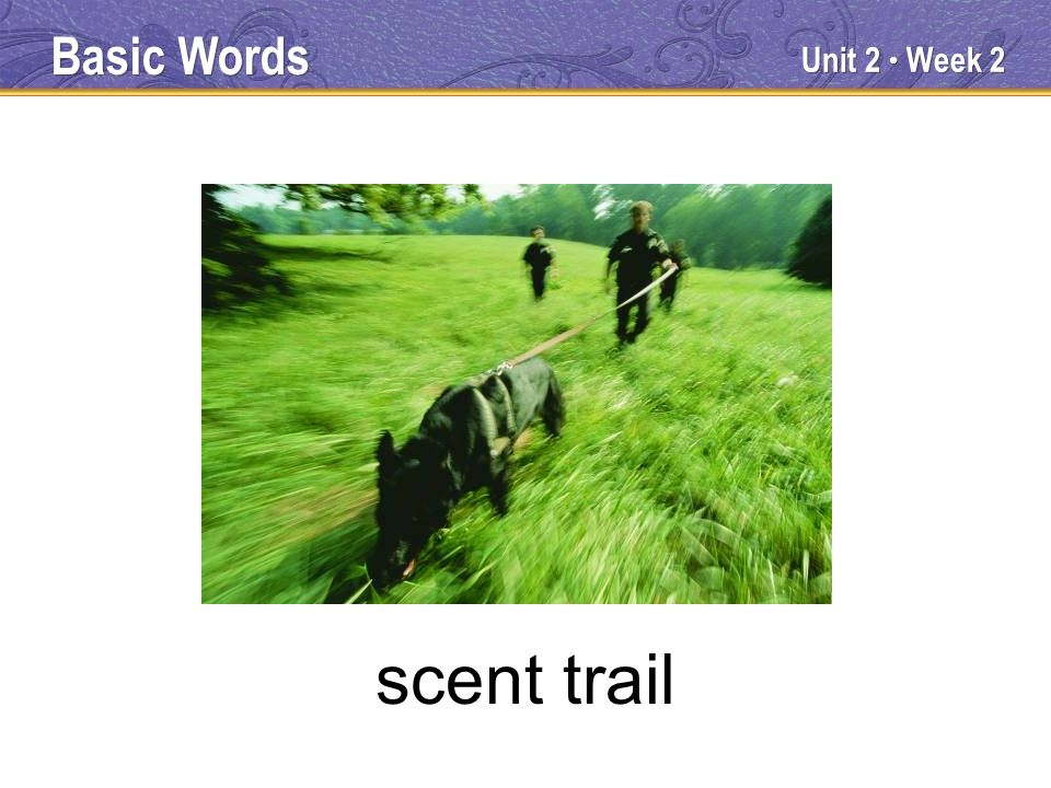 Unit 2 Week 2 scent trail Basic Words