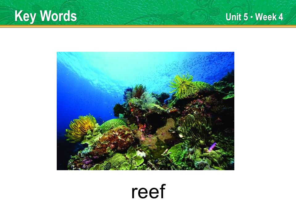 Unit 5 Week 4 reef Key Words