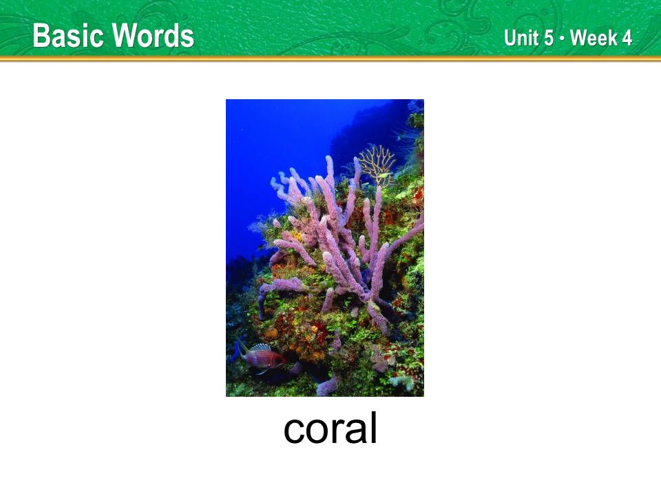 Unit 5 Week 4 coral Basic Words