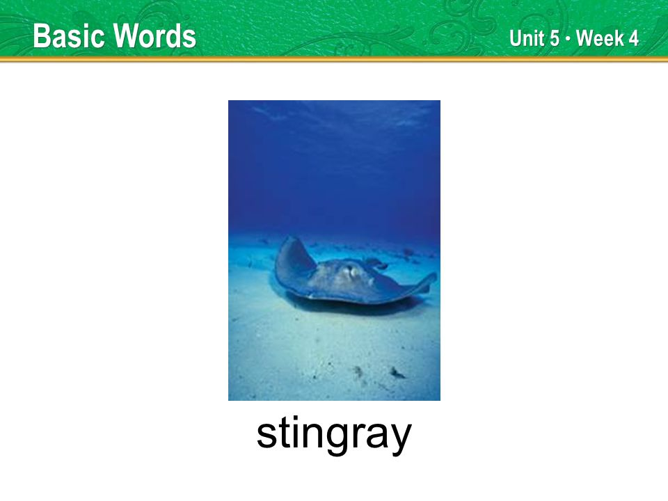 Unit 5 Week 4 stingray Basic Words