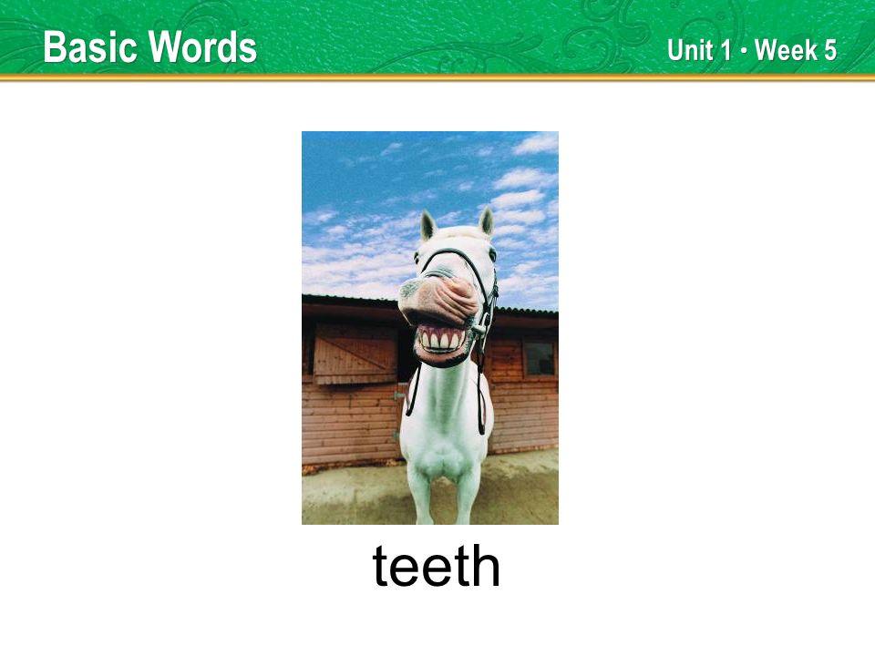 Unit 1 Week 5 teeth Basic Words