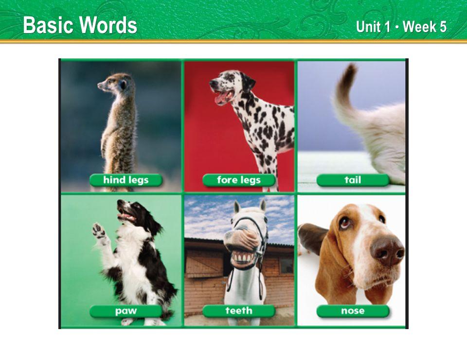 Unit 1 Week 5 Basic Words