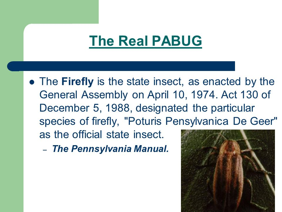 The Real PABUG The Firefly is the state insect, as enacted by the General Assembly on April 10, 1974.