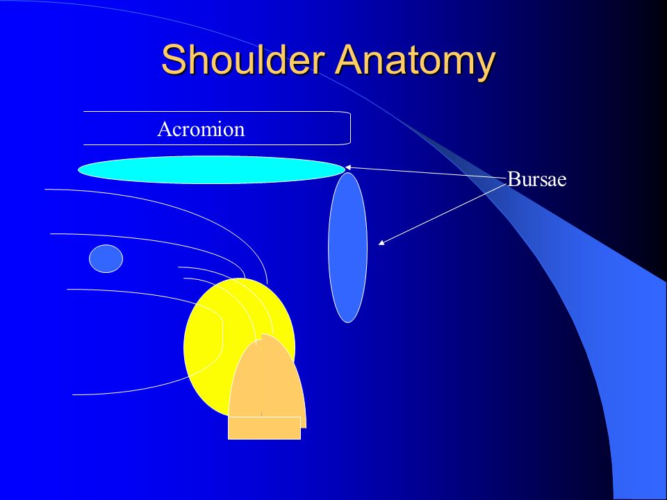 Shoulder Anatomy Acromion Bursae