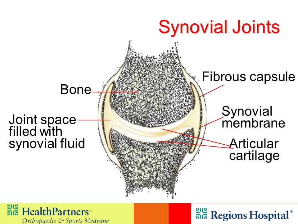 Bone Fibrous capsule Joint space filled with synovial fluid Articular cartilage Synovial membrane Synovial Joints