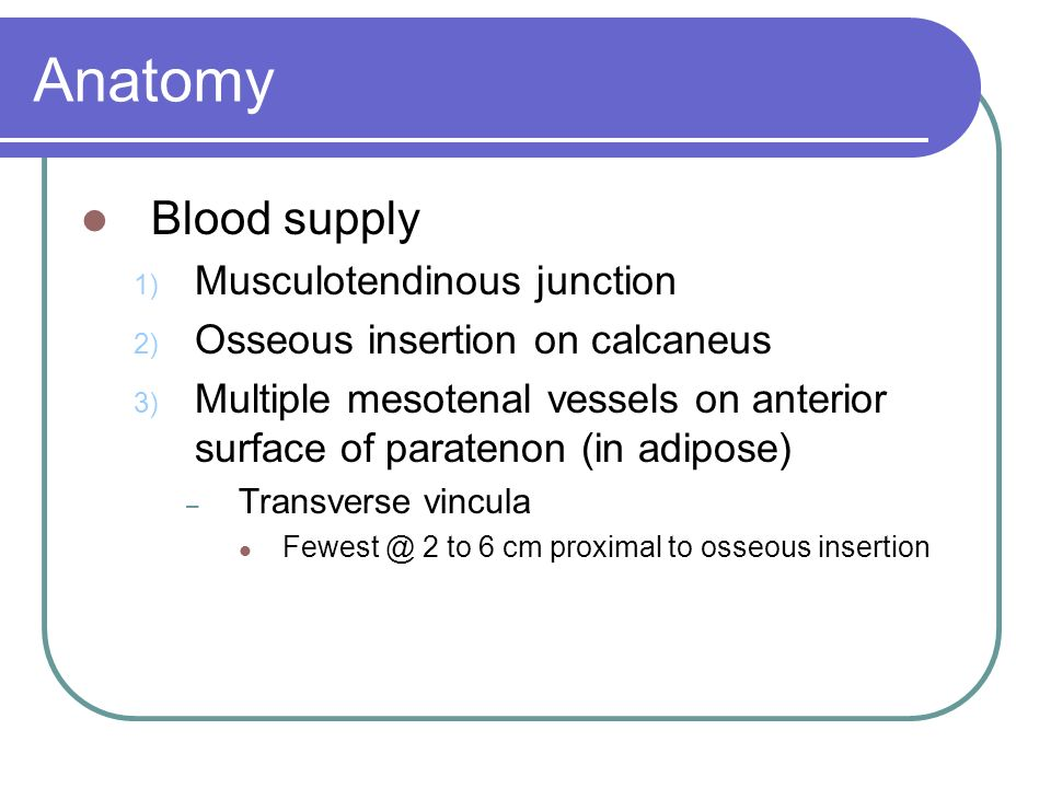 Anatomy Blood supply 1) Musculotendinous junction 2) Osseous insertion on calcaneus 3) Multiple mesotenal vessels on anterior surface of paratenon (in