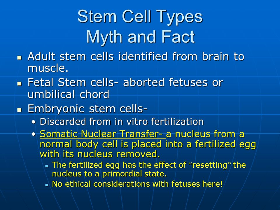 Stem Cell Types Myth and Fact Adult stem cells identified from brain to muscle. Adult stem cells identified from brain to muscle. Fetal Stem cells- ab
