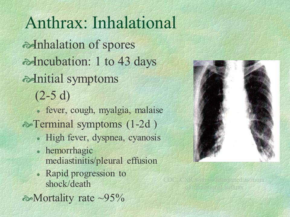 Anthrax: Inhalational Inhalation of spores Incubation: 1 to 43 days Initial symptoms (2-5 d) l fever, cough, myalgia, malaise Terminal symptoms (1-2d