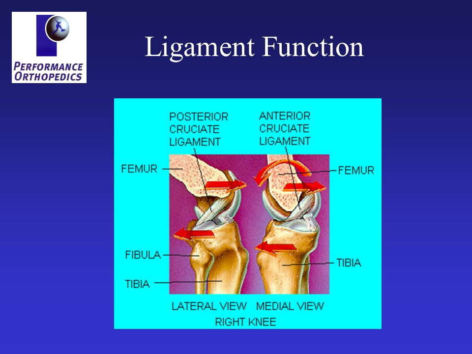 Ligament Function