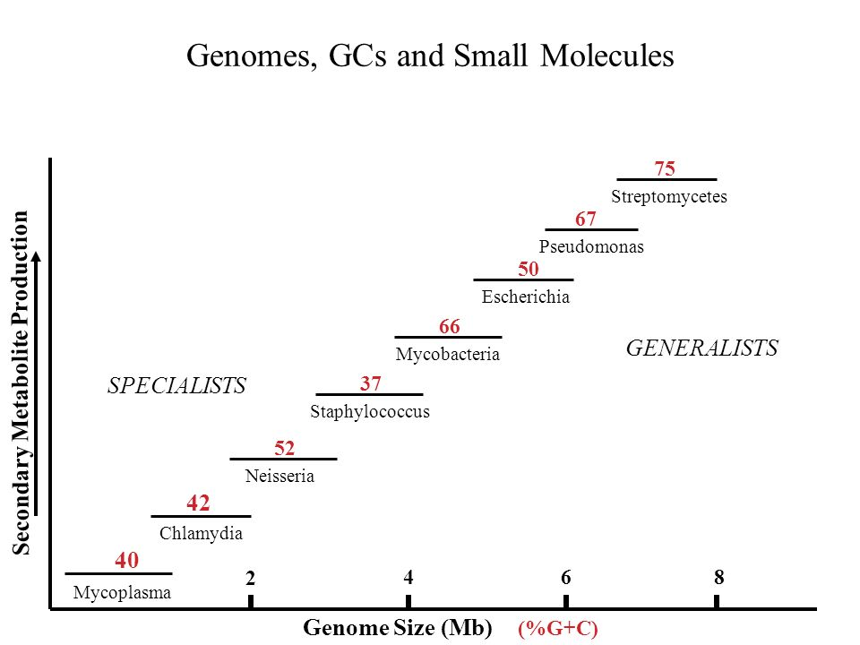 Genomes, GCs and Small Molecules Mycoplasma Chlamydia Neisseria Staphylococcus Mycobacteria Escherichia Pseudomonas Streptomycetes Genome Size (Mb) SPECIALISTS GENERALISTS Secondary Metabolite Production (%G+C) 42 40