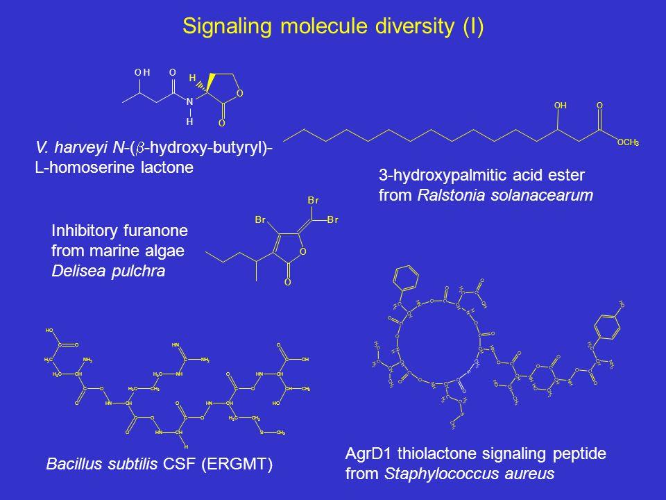 Signaling molecule diversity (I) O O H N H OOH O O Br Br Br AgrD1 thiolactone signaling peptide from Staphylococcus aureus Bacillus subtilis CSF (ERGMT) V.