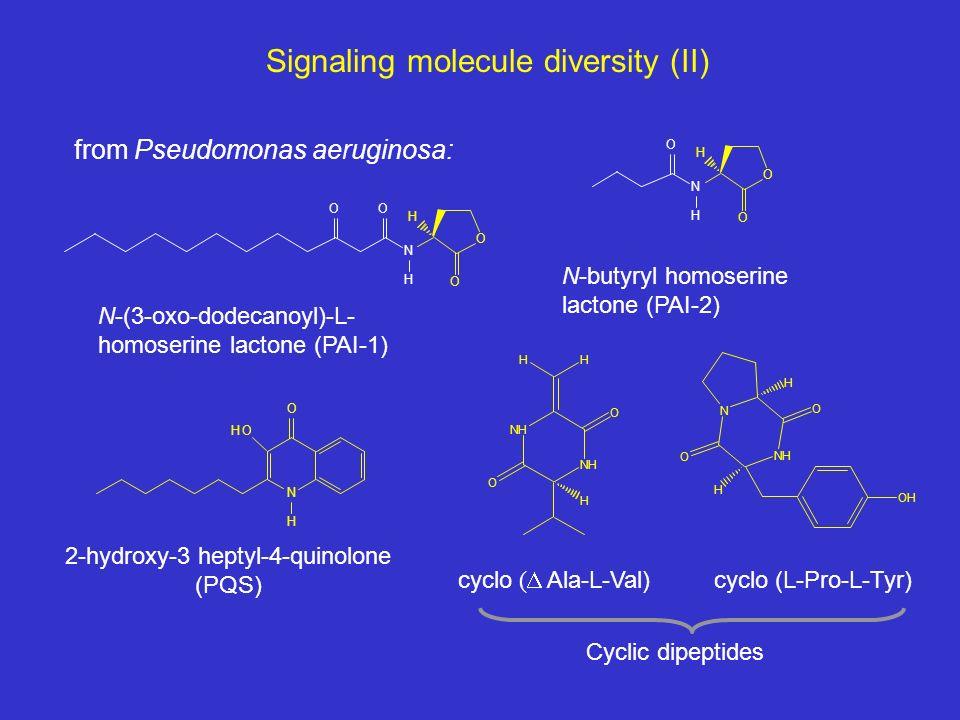 Signaling molecule diversity (II) O O H H N OO O O H N H O N O OH H N-(3-oxo-dodecanoyl)-L- homoserine lactone (PAI-1) N-butyryl homoserine lactone (PAI-2) 2-hydroxy-3 heptyl-4-quinolone (PQS) NH NH O O HH H N NH O O H H OH cyclo ( Ala-L-Val) cyclo (L-Pro-L-Tyr) from Pseudomonas aeruginosa: Cyclic dipeptides