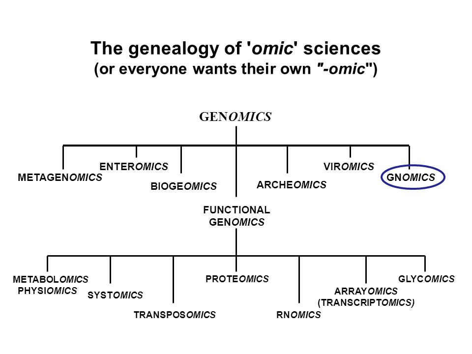 The genealogy of omic sciences (or everyone wants their own -omic ) GENOMICS FUNCTIONAL GENOMICS GNOMICSMETAGENOMICS ENTEROMICSVIROMICS METABOLOMICS PHYSIOMICS PROTEOMICS RNOMICS ARRAYOMICS (TRANSCRIPTOMICS) ARCHEOMICS TRANSPOSOMICS BIOGEOMICS SYSTOMICS GLYCOMICS