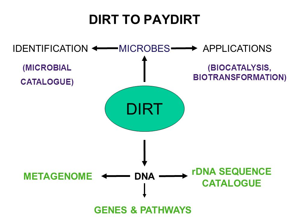 DIRT TO PAYDIRT DIRT MICROBESAPPLICATIONSIDENTIFICATION (BIOCATALYSIS, BIOTRANSFORMATION) (MICROBIAL CATALOGUE) DNA rDNA SEQUENCE CATALOGUE METAGENOME GENES & PATHWAYS