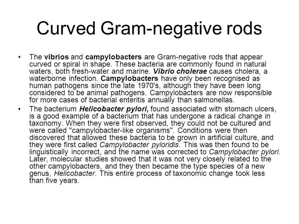 Curved Gram-negative rods The vibrios and campylobacters are Gram-negative rods that appear curved or spiral in shape. These bacteria are commonly fou