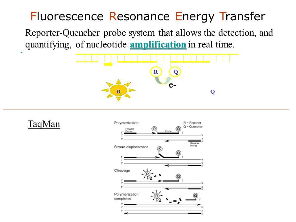 - Fluorescence Resonance Energy Transfer R Q e- RQ TaqMan __________________________________________________________
