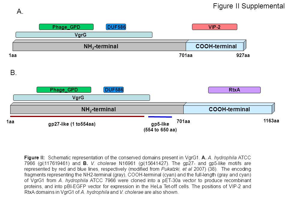 Figure II Supplemental 1aa701aa927aa NH 2 -terminal COOH-terminal VgrG Phage_GPDDUF586VIP-2 A.