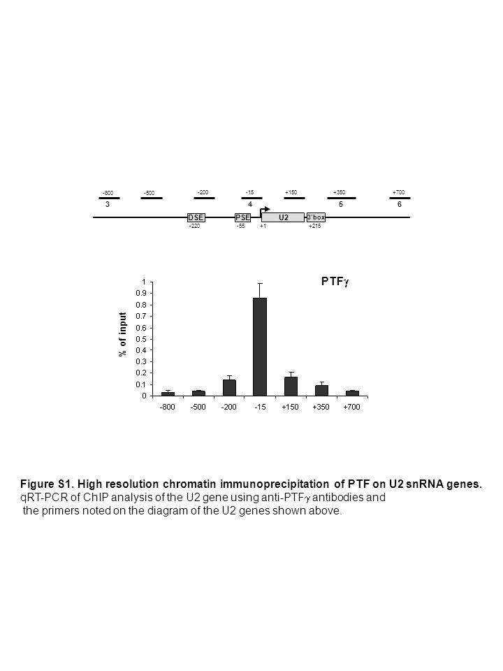 3box PSE -55 DSE -220+1 +350 U2 -800-500 +700 +150 -15-200 +215 % of input PTF 4563 Figure S1. High resolution chromatin immunoprecipitation of PTF on