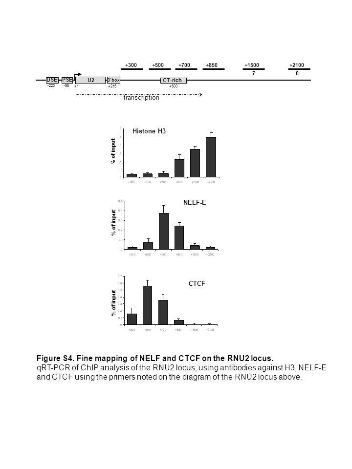 3box PSE -55 DSE -220 +1 +215 CT-rich +600 U2 +850+1500+2100+300+500+700 78 transcription % of input NELF-E Histone H3 CTCF Figure S4.
