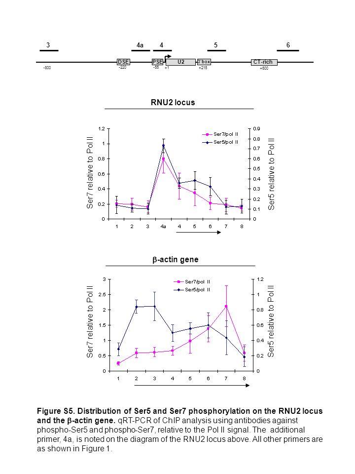 RNU2 locus -actin gene 3box PSE -55 DSE -220 +1 +215 CT-rich +600 U2 4a 456 3 Ser5 relative to Pol II Ser7 relative to Pol II -800 Figure S5.