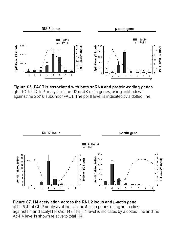 Spt16 level (% input) Pol II level (% input) Spt16 Pol II Spt16 Pol II RNU2 locus -actin gene Figure S6.