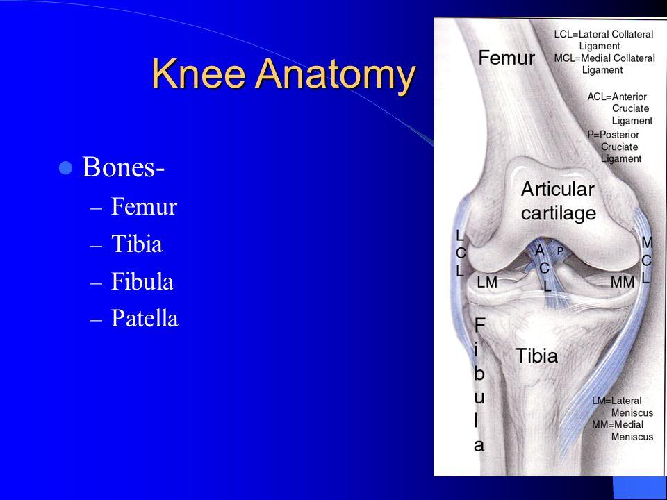 Knee Anatomy Bones- – Femur – Tibia – Fibula – Patella