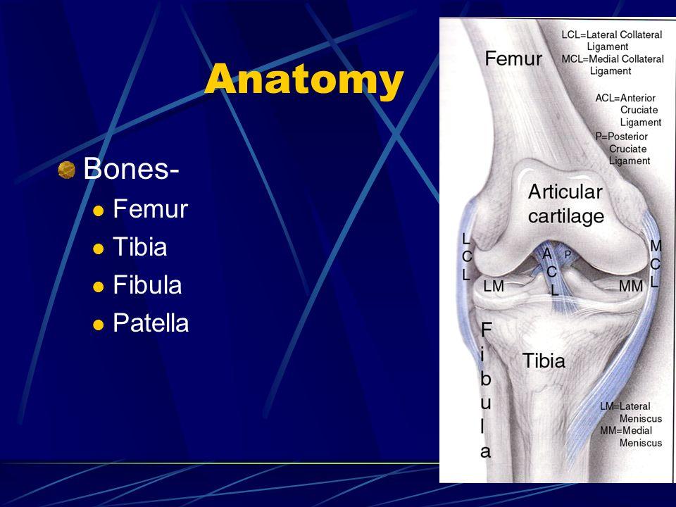 Anatomy Bones- Femur Tibia Fibula Patella