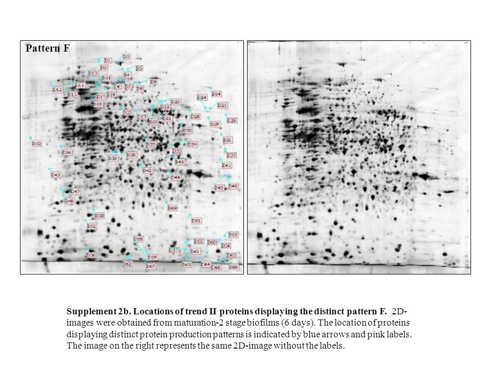 Pattern G Supplement 3.Locations of trend III proteins displaying the distinct pattern G.