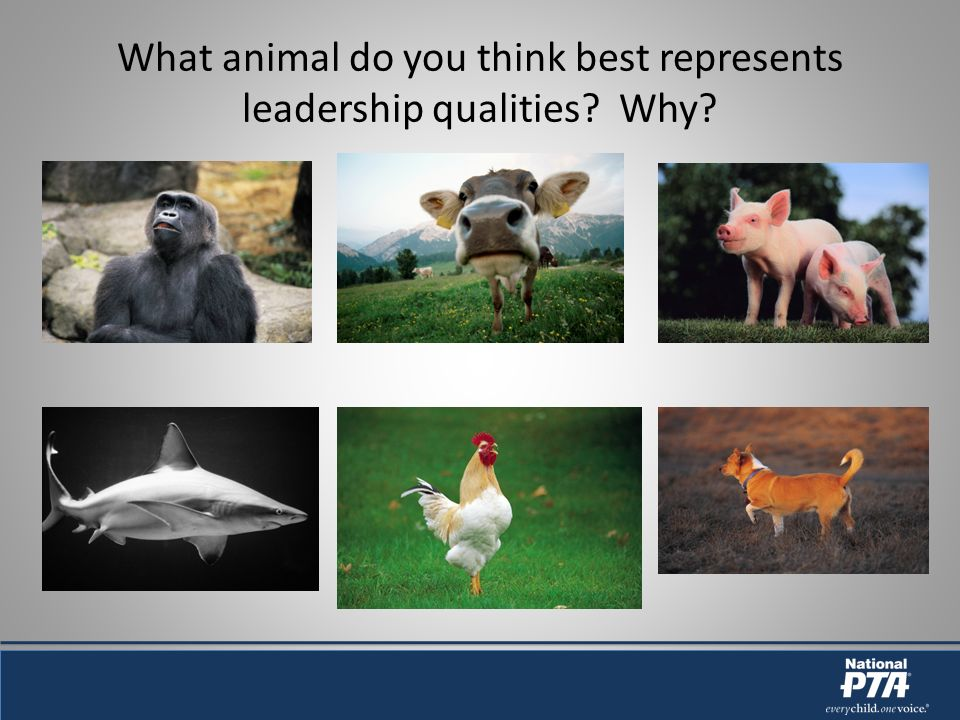 What animal do you think best represents leadership qualities Why