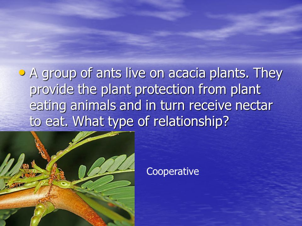 A group of ants live on acacia plants. They provide the plant protection from plant eating animals and in turn receive nectar to eat. What type of rel