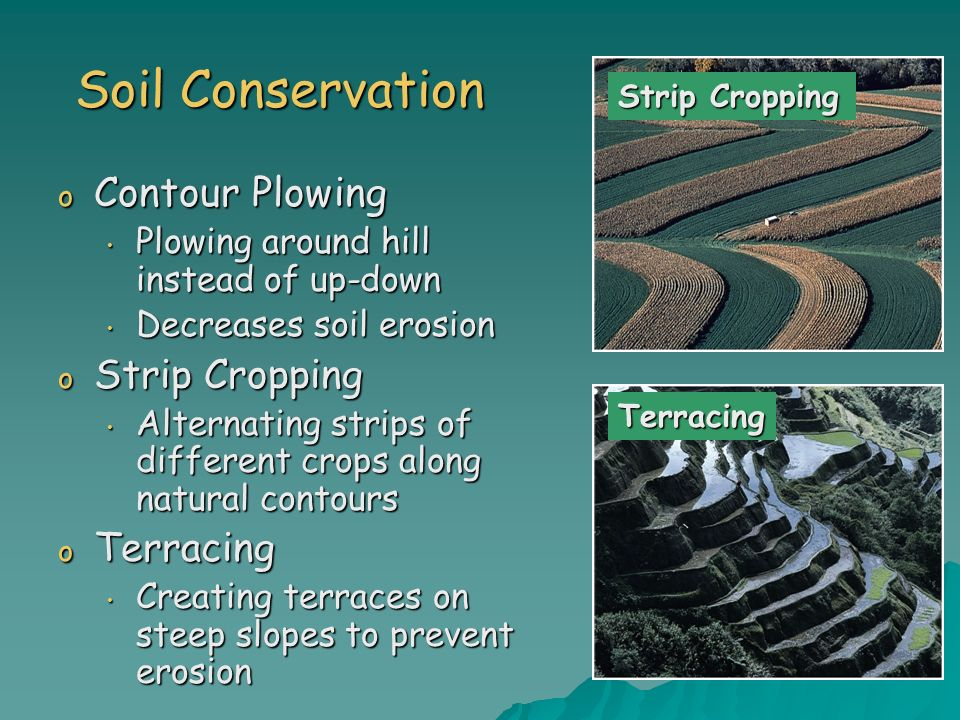 Soil Conservation o Contour Plowing Plowing around hill instead of up-down Plowing around hill instead of up-down Decreases soil erosion Decreases soi