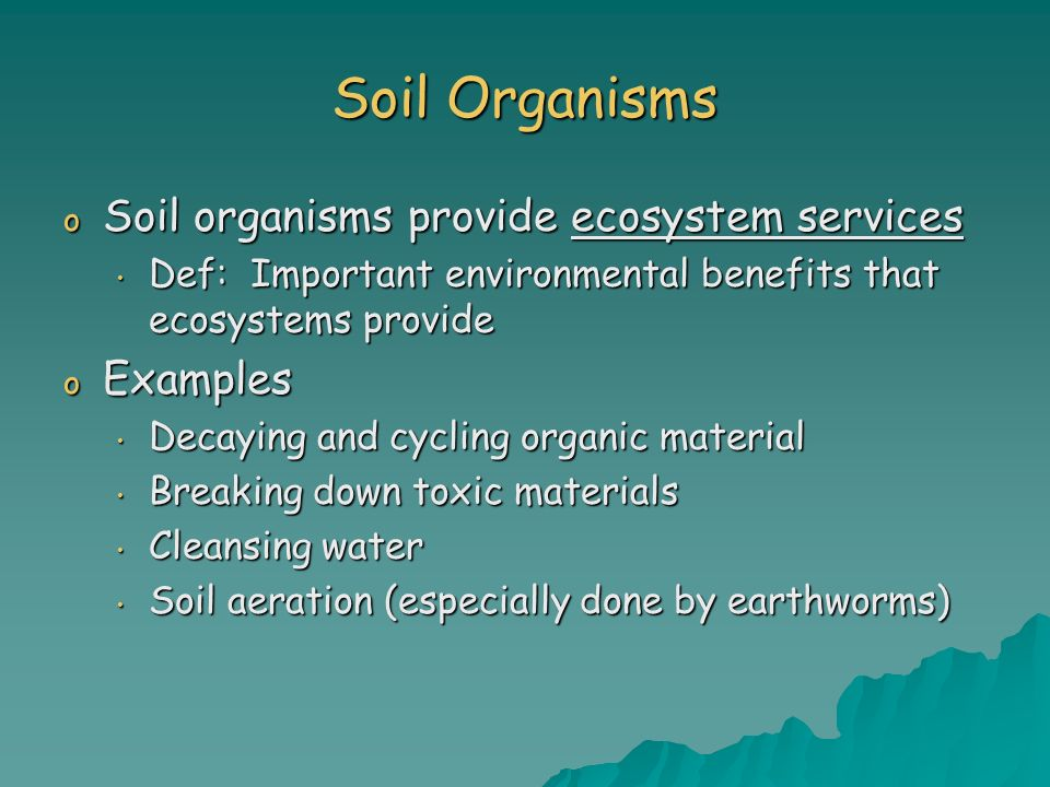 Soil Organisms o Soil organisms provide ecosystem services Def: Important environmental benefits that ecosystems provide Def: Important environmental
